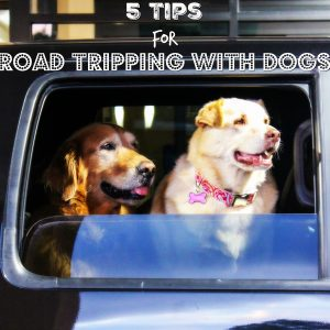 Travel Tips: Road Tripping with Dogs